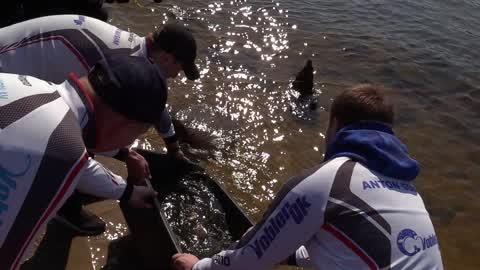 More than 5 tons of young fish of carps released into the Dnieper River in Kiev