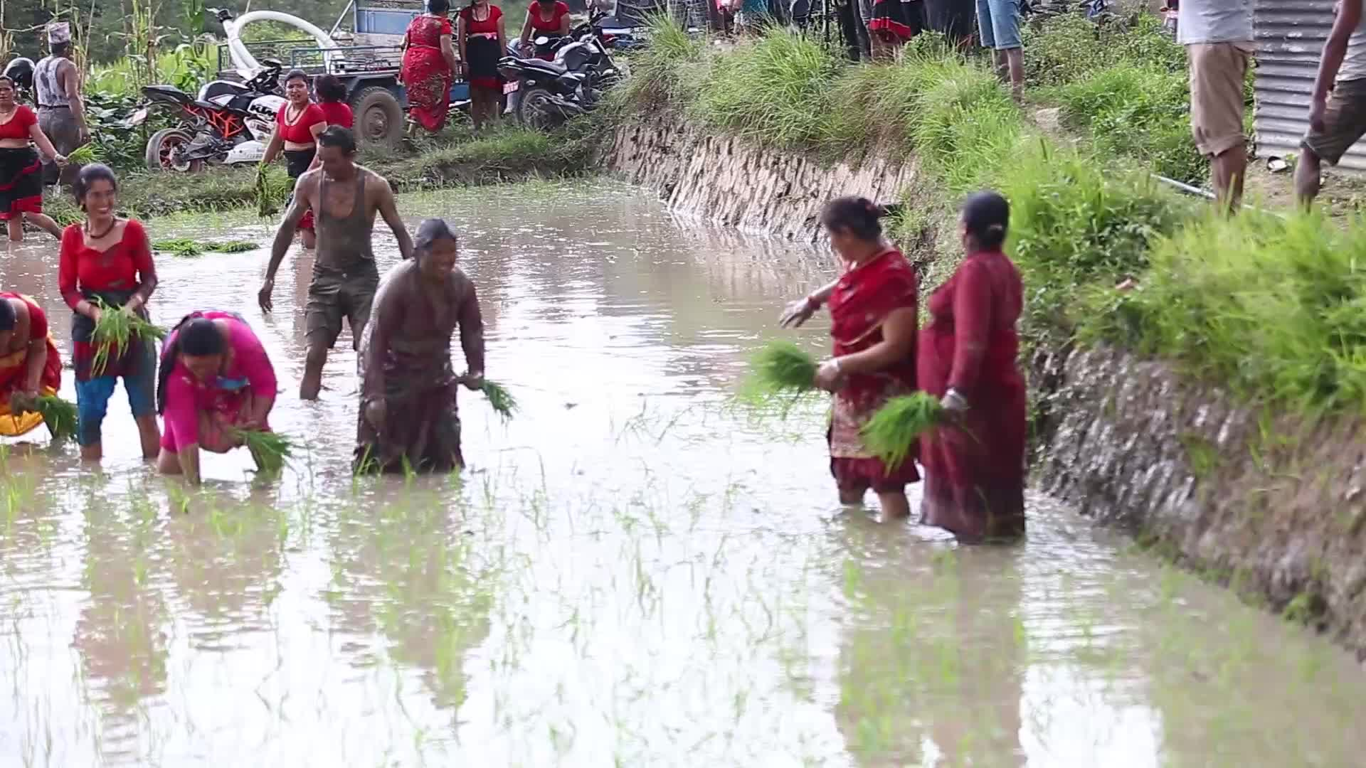 National Paddy Day celebrated in Nepal